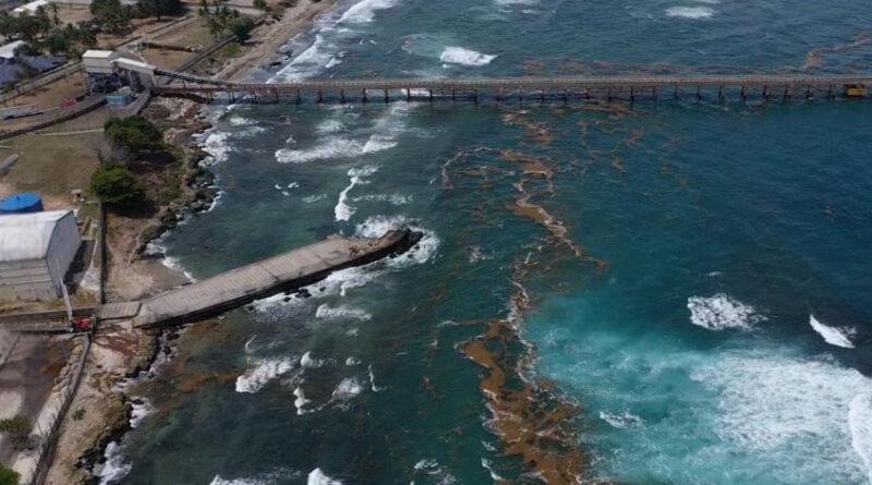 Alertan sobre afluencia de sargazo en la región Sur del país