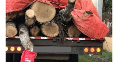 Retienen en Jarabacoa camión llegó de Ocoa cargado de robles