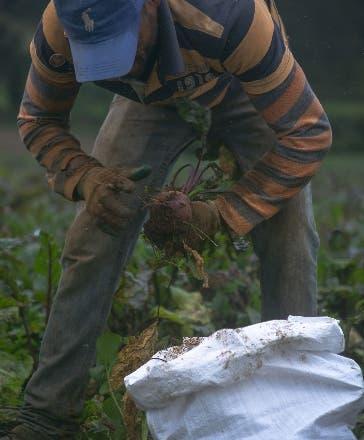 Más de 150 productores criollos hacen jugo en EE. UU.