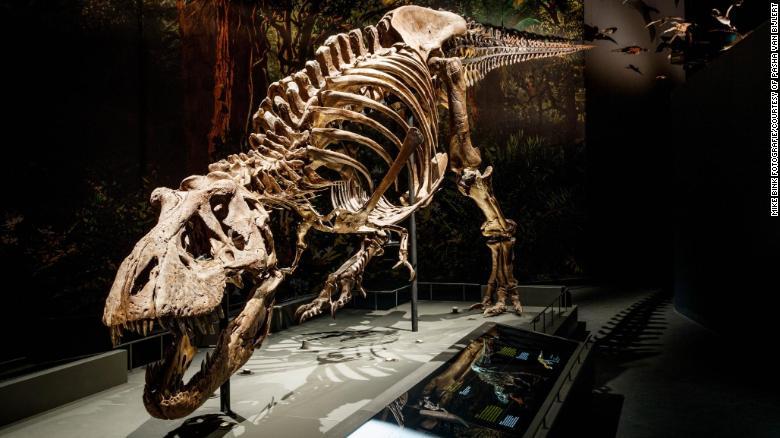 Tyrannosaurus rex caminaba sorprendentemente lento, encuentra un nuevo estudio