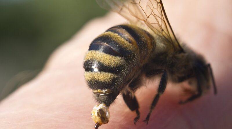 Un ciclista se tragó una abeja que lo picó en la garganta y le causó la muerte