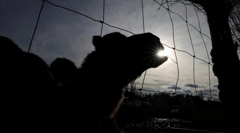 ¿Cuál es el fin de controlar el contagio de COVID-19 en animales?