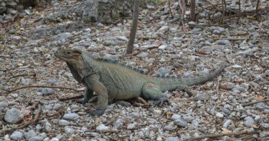 Proyecto de conservación de la biodiversidad de CEMEX recibe recertificación