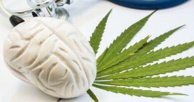 Así afecta el cannabis al cerebro