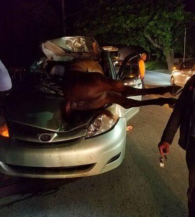 Aparatoso accidente anoche entre caballo y carro en Higüey