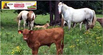 Docenas de estadounidenses intoxicados por consumo de medicina para caballos y vacas que supuestamente previene el COVID