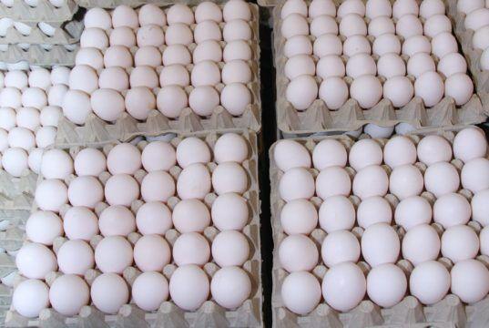 """Productores de huevo aseguran industria """"corre grave peligro"""""""
