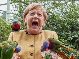 Elecciones en Alemania: picoteada por un loro, Merkel cerró la campaña y comienza a despedirse de la escena política tras 16 años
